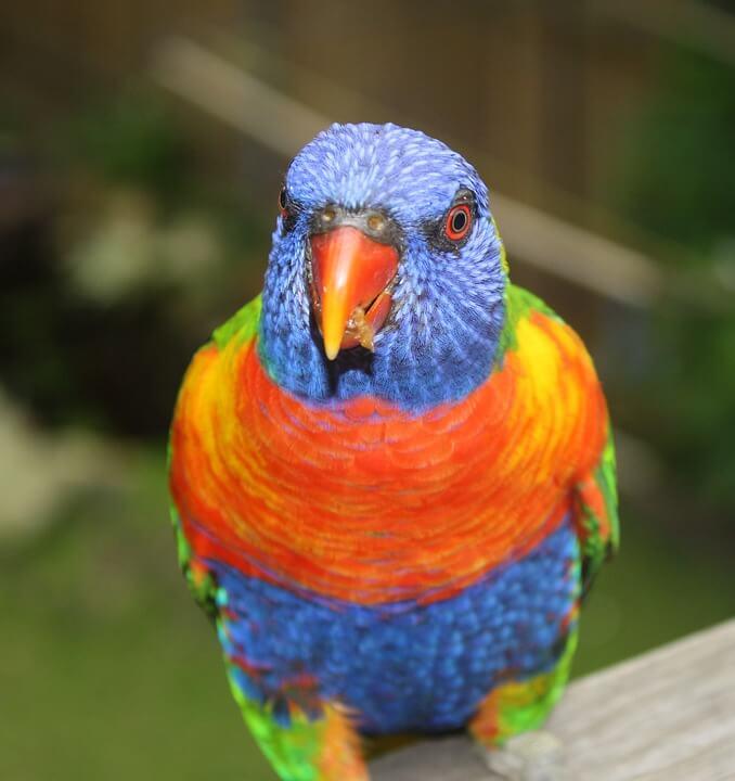 clever-bird